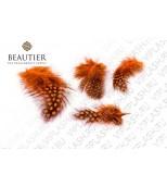 Набор оранжевых перьев